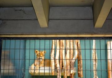 zoo berlin 12 Barbara Poplade Schmalz©