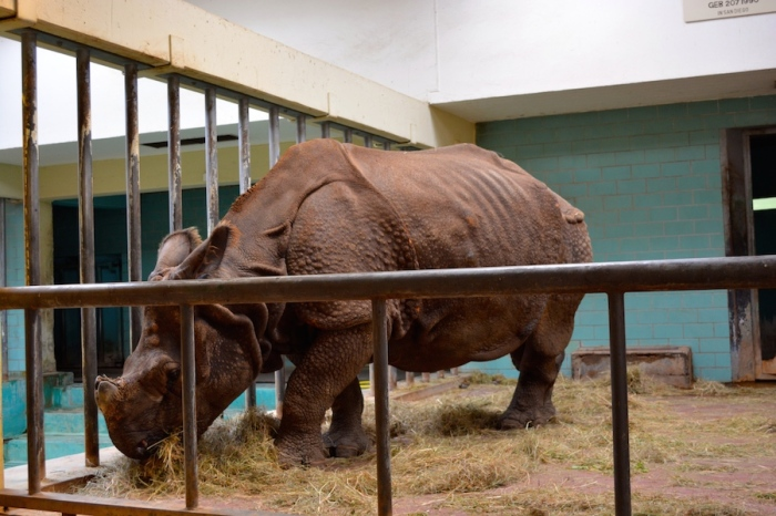 rinoceronte zoo berlin - Barbara Poplade Schmalz©